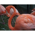 oh those colors! not pink flamingo but ORANGE!