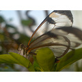 garden gardens butterfly insect insects leaf leaves small transparent
