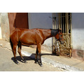 horse in the street in trinidad
