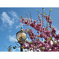 pink pinkfph spring lamppost lamp sky clouds