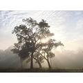 nice sun morning rays break fog tree perth hills littleollie