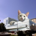 montage building cat funny