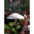 mushroom autumn light