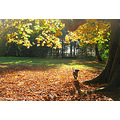 dog autumn fraeylemaborg tree leafs