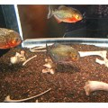 Series Aquarium Fish