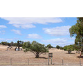 fix up barn green paddock perth hills littleollie