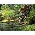 Plants Hot Cornwall Project Eden Zone Tropical Plant MMVI