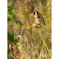 More colors, this time natural...