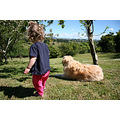 newzealand dog goldenretriever toddler child