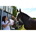 2nd June 2013 Saul Gymkhana