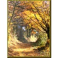autumn France nature country road trees colours walk landscape