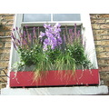 windowbox london