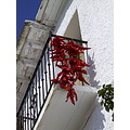 Peppers drying in Spain