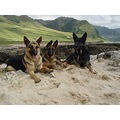 dogs at west side beach of Oahu Island