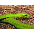 Reptile Animal Snake Nature