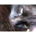 My wonderful black love peixy cat cute special