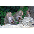 zespook lucknow india monkeys