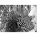 guy men black white blackandwhite bw cabbage palm tree