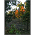 fall foliage trees nature