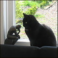 reflectionthursday chenga cat statue rodin