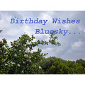 birthday wishes bluesky