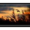 reeds nature sunset apexpark burnhamonsea somerset burnham somersetdreams