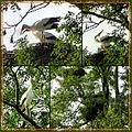 storks nest autumn collage