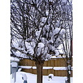 snow winter tree NiagaraFalls Canada