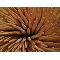 toothpick spiral wood wooden