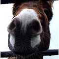 donkey michael nose cute funny