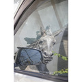 reflectionthursday horse car window kuta bali littleollie