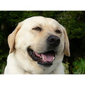 dog animal friend friendly smile happy closeup