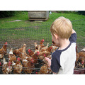 """Then he took me to see """"his"""" chickens - there's a farm next door to his home, lucky boy!"""