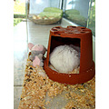 mini hamster house white donkey