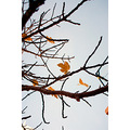 tree leaves autumn