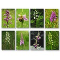 Collage Nature Flowers Orchids