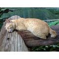 Please don't disturb me.. I am resting ok? You can take picture of me but don't wake me up! lol