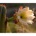 cacti flower nature plants wild insects spain malaga casaimagine casa imagine re