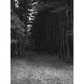 nature forest tree field bw