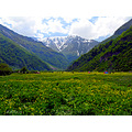 IRAN LANDSCAPE DARYASAR SPRING FOREST mountains WILDflowers