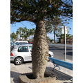 Spain Torremolinos tree nature