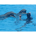 happyness dolphin training content bonding