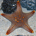 star fish atlantis dubai