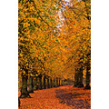 Autumn at Clumber Park 2011