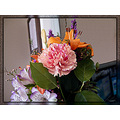 Carnation Flower Bouquet Macro G10 DoctorsOffice Hillsboro Aloha Oregon