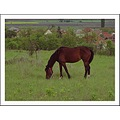 nature landscape field tree bush roof house horse animalfriday2