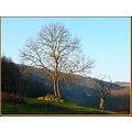 winter tree nature France country landscape afternoon