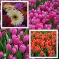 spring garden trade fair flower color collage