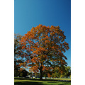 stlouis missouri us usa plant tree sky fall blue orange 2006