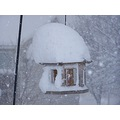 Our poor bird feeder....I saw a bird in it this morning  digging the snow out of it with its beak...